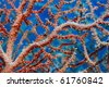 Close up of sea fan underwater - stock photo