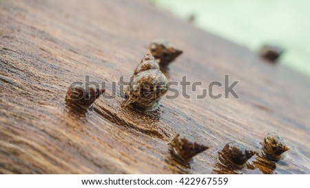 Close up of sea shells on wood trunk. - stock photo