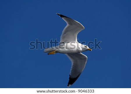 Close-up of seagull, flying over blue sky