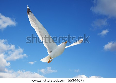Close-up of seagull, flying over blue sky with clouds - stock photo