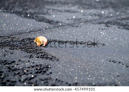 Close up of seashell on beach with black volcanic sand in Bali. Indonesia. Black sand of volcanic beach with sea shell close up view in Bali, Indonesia. Volcanic Bali beach, Indonesia. Bali beach view - stock photo