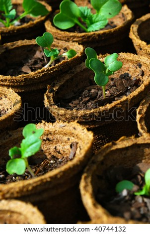 close up of seedlings in biodegradable pots - stock photo