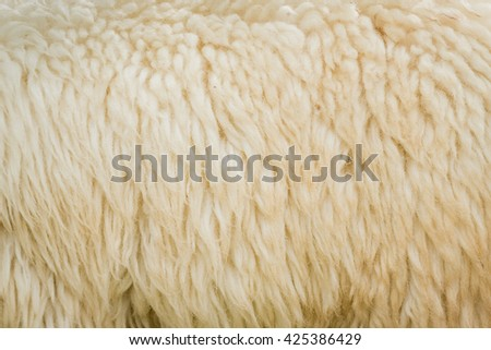 Close up of sheep wool texture  background - stock photo