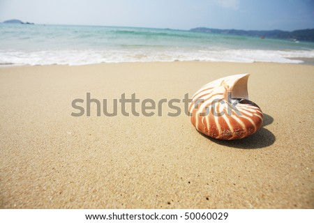 close up of shell on beach - stock photo