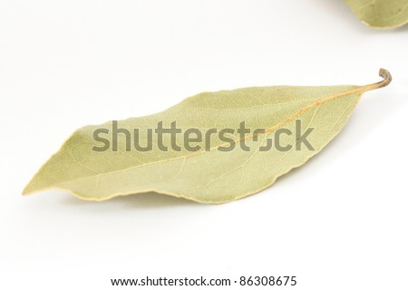 Close up of single piece of bay leaf spice on white background - stock photo