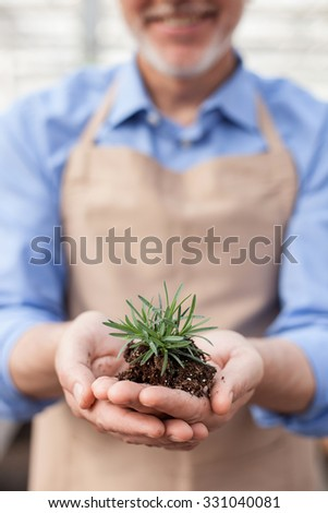 Close up of skillful old florist holding plant with soil in his hands. The man is standing and smiling at garden center - stock photo
