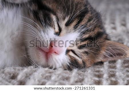 Close up of sleepy cat - stock photo