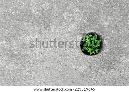 Close up of small bush growing in cavity circle on the cement fl - stock photo