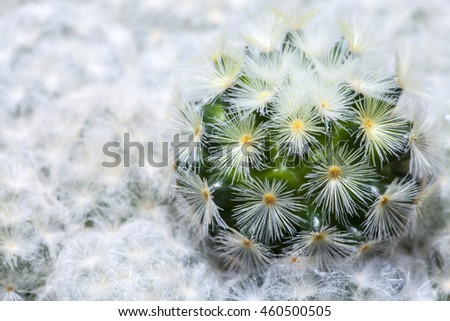 Close up of small cactus in the pots. Little Desert tree.Background cactus.