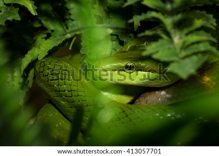 Close up of snake's head, selective focus point - stock photo