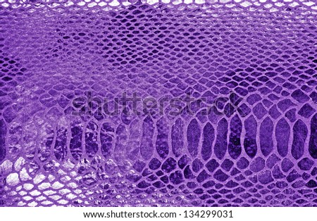Close-up of snakeskin leather - stock photo