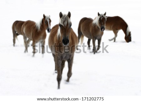 close-up of some brown horses - stock photo