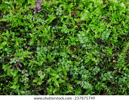 close-up of some vividly colored green moss - stock photo