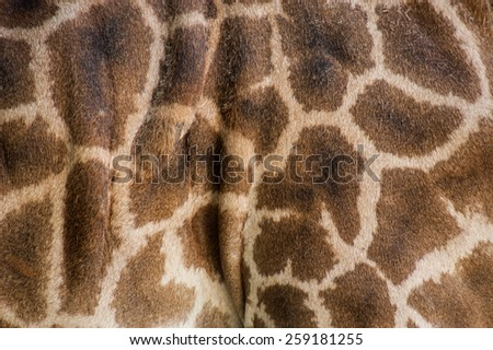 Close up of spotted giraffe skin