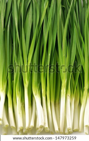 Close-up of spring onions  - stock photo