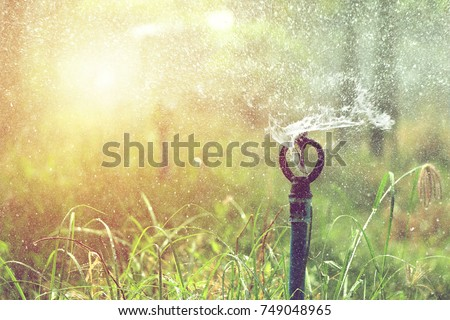 close up of sprinkler head watering in agricultural plants, irrigation system