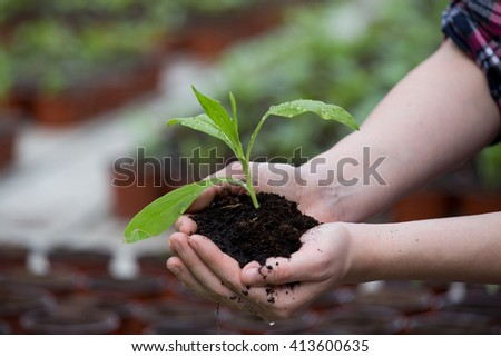 Close up of sprout in soil in female hands in greenhouse. Planting concept