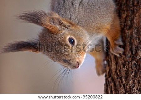 Close-up of squirrel - stock photo