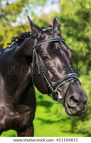 Close-up of stallion with mane  against greenery in spring