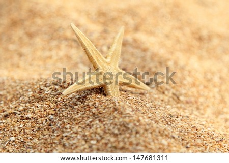 Close-up of starfish on sand/Starfish on the beach - stock photo