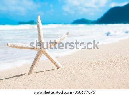 Close up of starfish on the beach. (location Hawaii) - stock photo
