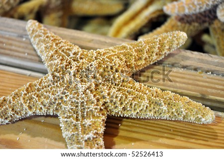Close up of starfish on wood - stock photo