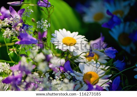 Close-up of summer wildflowers bouquet - stock photo