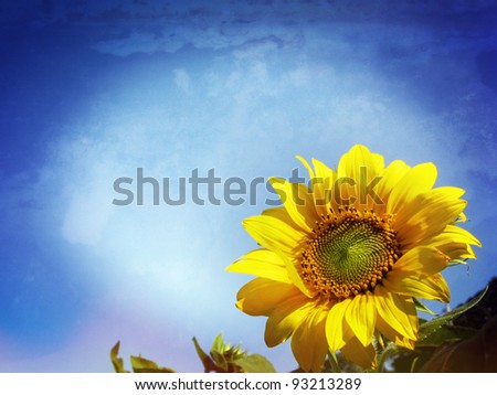 Close-up of sun flower against a blue sky