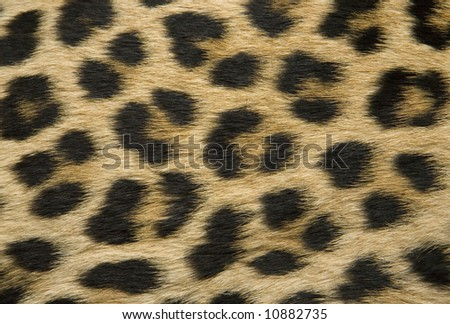 Close-up of surface fur leopard (Panthera pardus)