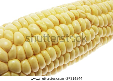 Close Up of Sweet Corn Cob