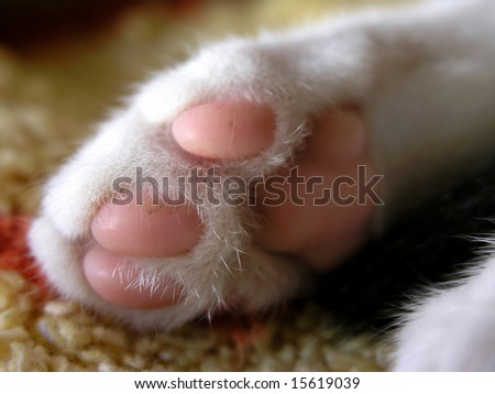 close up of sweet little pink kitten paw - stock photo