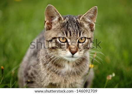 Close up of tabby cat sitting in the garden