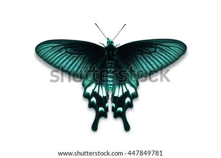 Close up of teal color Adamson's Rose (Byasa adamsoni) butterfly, isolated on white background with clipping path, dorsal view - stock photo