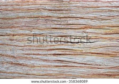 Close up of texture and patterns on old decaying trunk of tree - stock photo