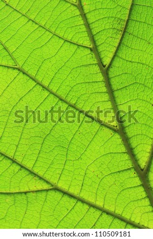Close up of textured green leaves - stock photo