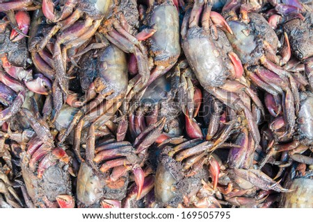 close up of thai food in the market place. - stock photo