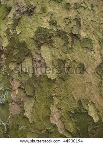 Close up of the bark of a tree trunk - stock photo