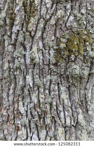 Close up of the bark of an oak tree - stock photo