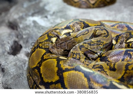 Close up of the bright, big snake - stock photo