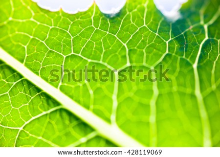 Close up of the bright green leaf in the sunshine. - stock photo
