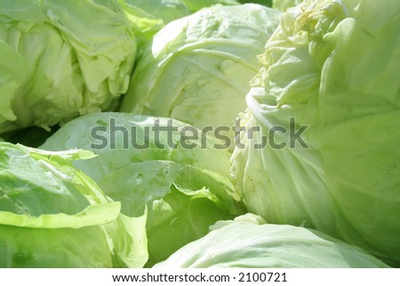 Close-up of the cabbage