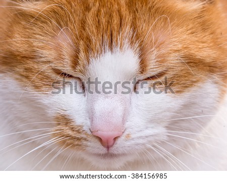 Close up of the face of a red haired cat with her eyes closed - stock photo
