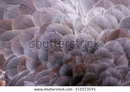 Close-up of the feathers of a bird - stock photo