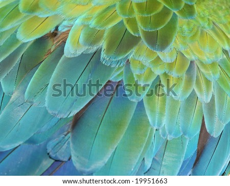 Close-up of the feathers of a green or blue and gold macaw parrot - stock photo