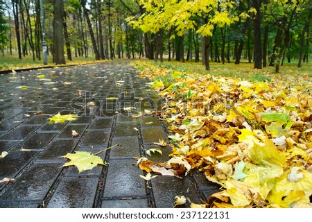 Close-up of the form alley autumn park - stock photo