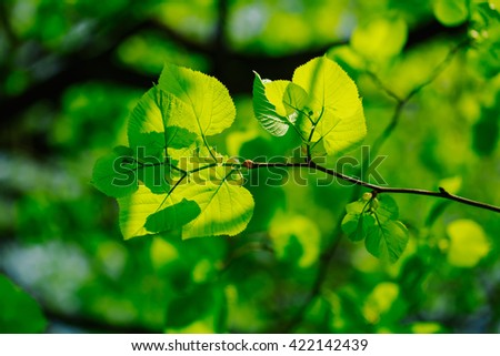 Close up of the green leaves on the tree