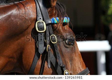 Close up of the head with bridle for race or dressage horse - stock photo