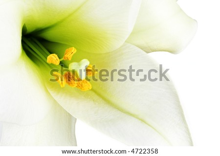Close-up of the inside of a white lilly - stock photo