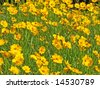Close up of the orange and yellow marigolds. - stock photo