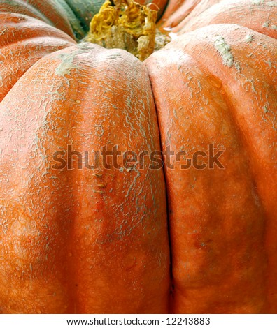 Close up of the skin of a large pumpkin